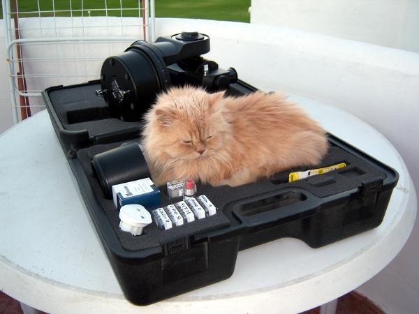 Cat Winnie